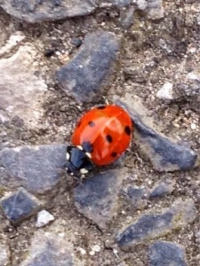 A Lovely Little Ladybird
