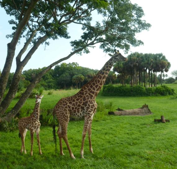 My Sunday Photo, Animal Kingdom www.extraordinarychaos.com