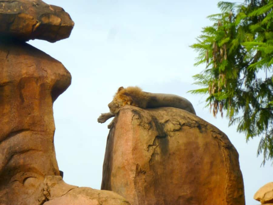 Our Top Tips For Animal Kingdom With Teens And Tweens www.extraordinarychaos.com