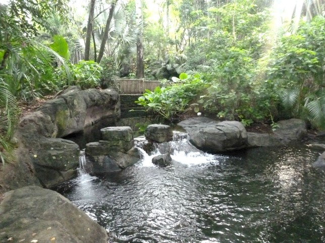 Our Top Tips For Animal Kingdom