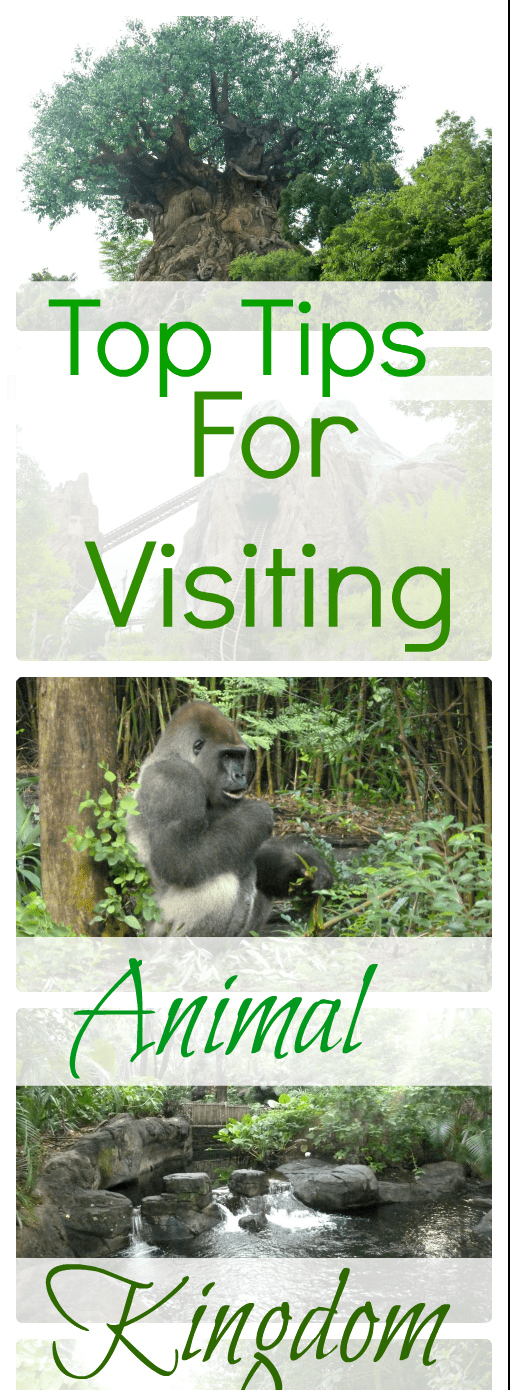 Top Tips for visiting Animal kingdom