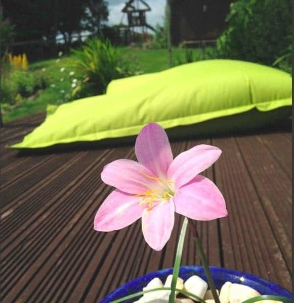 Creating Areas in your garden