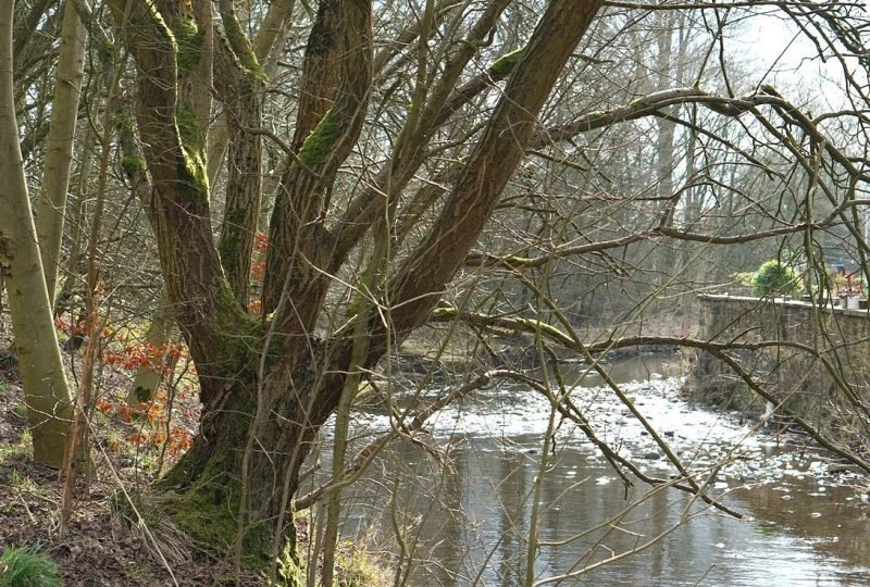 My Sunday Photo, A Walk Along The River in a Lancashire Village