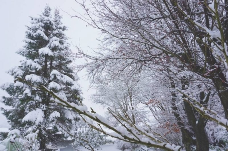 My Sunday Photo & Sudden Snow