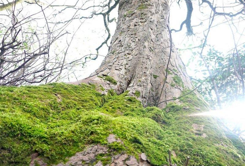 Sunday Walks And Gorgeous Tree's