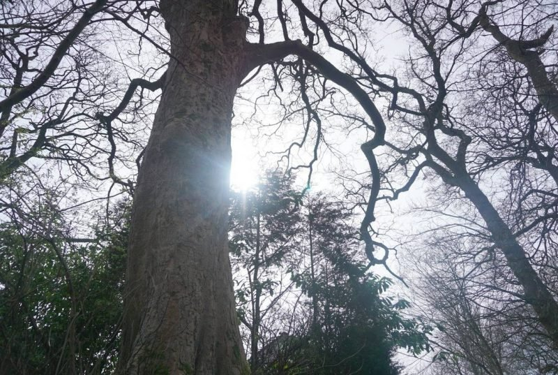 A Sunday Walk And A Gorgeous Tree