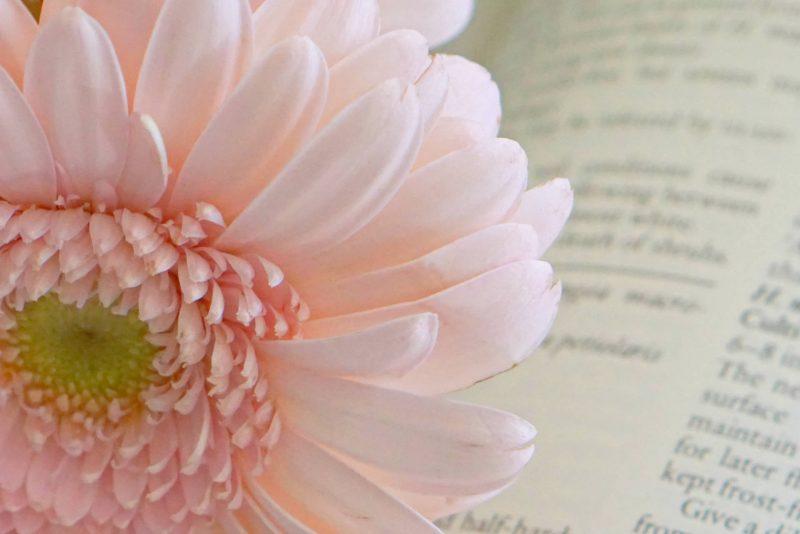 Flowers And Sunshine, My Sunday Photo
