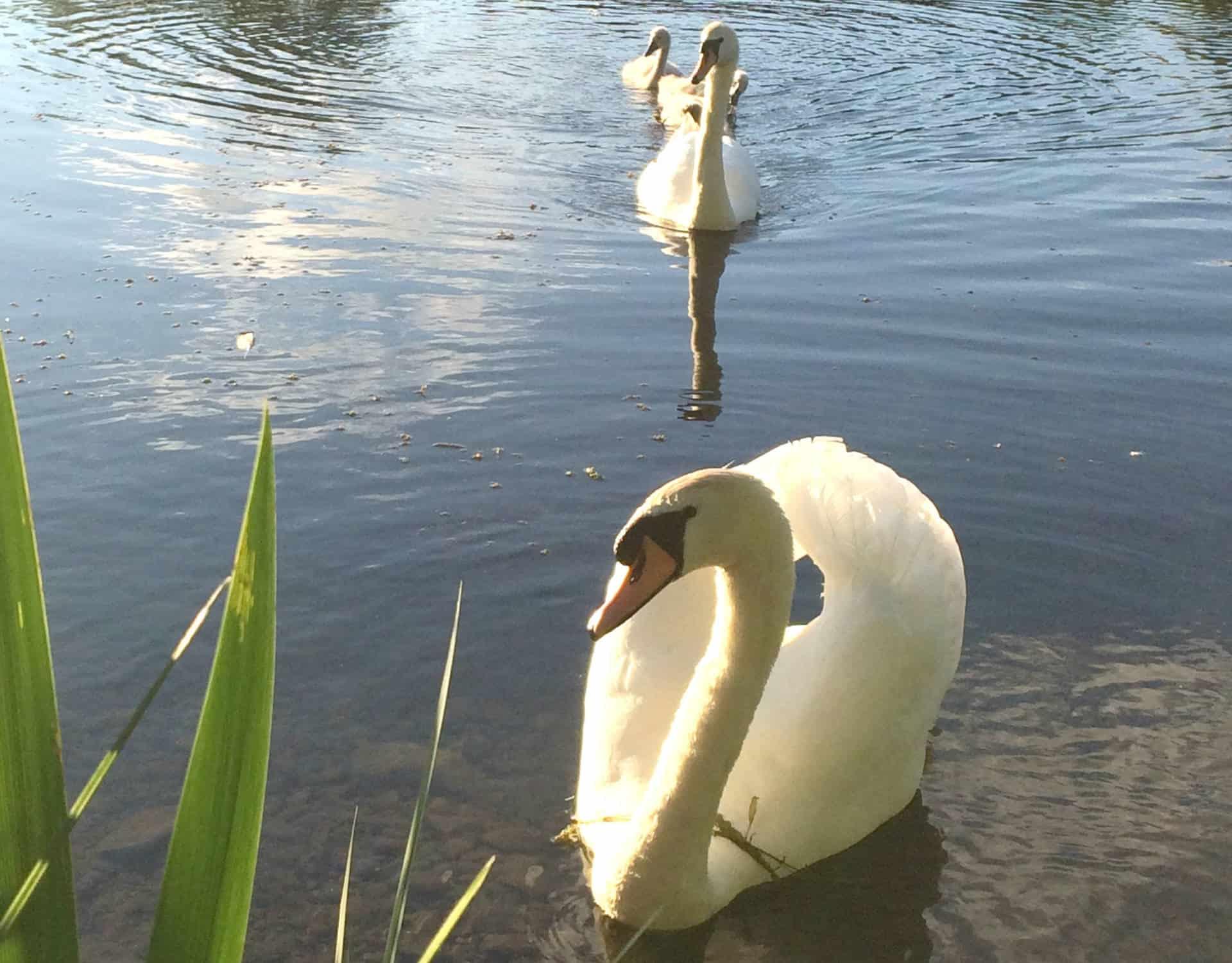 Enjoying Tranquility at Brompton Lakes aa