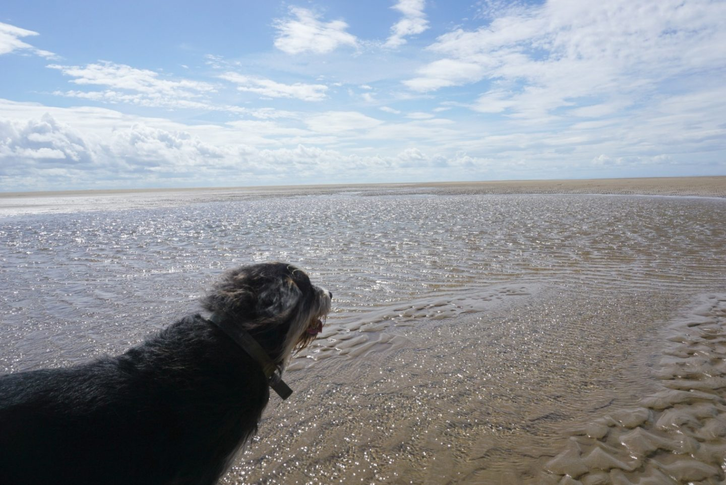 Dog on the beach At St Annes www.extraordinarychaos.com