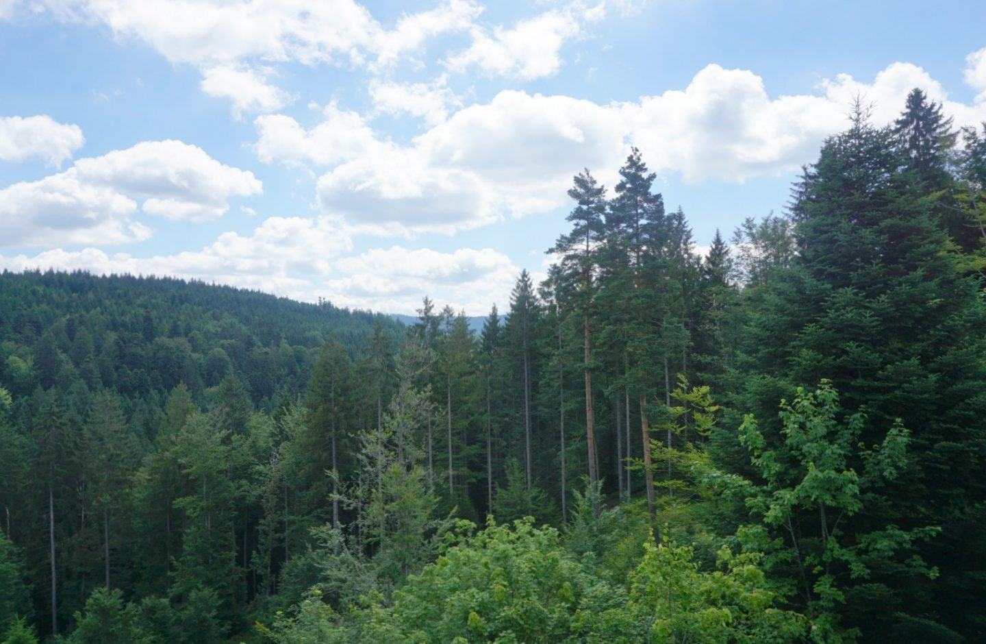 A view of the Black Forest, My Sunday Photos www.extraordinarychaos.com