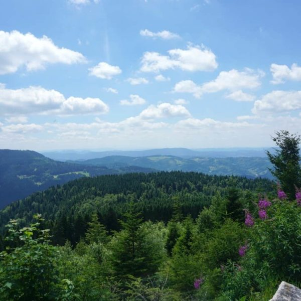Being at the Black Forest is like being at the tops of the world www.extraordinarychaos.com