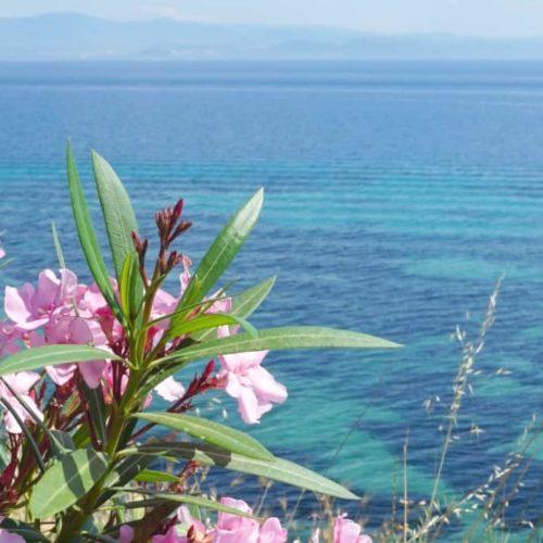 My Sunday Photo From Afitos Greece www.extraordinarychaos.com 4