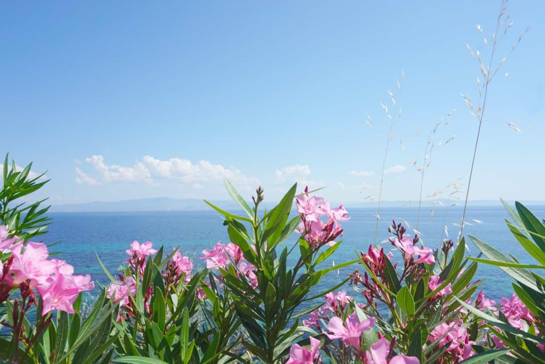 My Sunday Photo From Afitos Greece www.extraordinarychaos.com