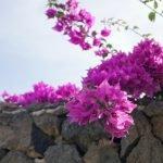 The grounds at Aqua Park Lanzarote