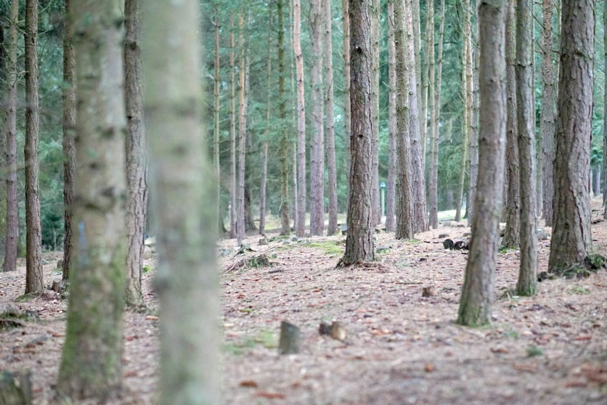 The Forrest At Center Parks Whinfell Forest www.extraordinarychaos.com