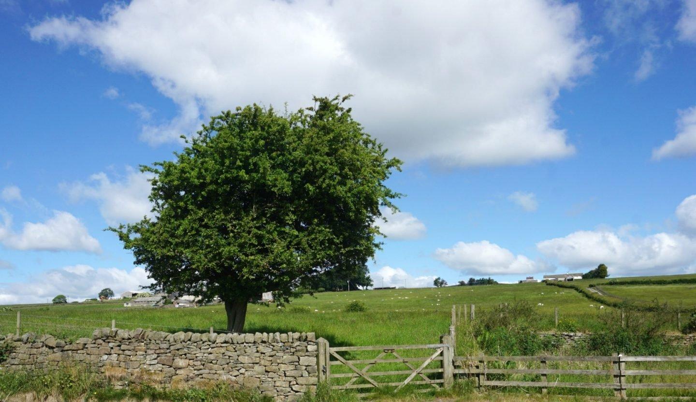 Lancashire Country Walk www.extraordinarychoas.com