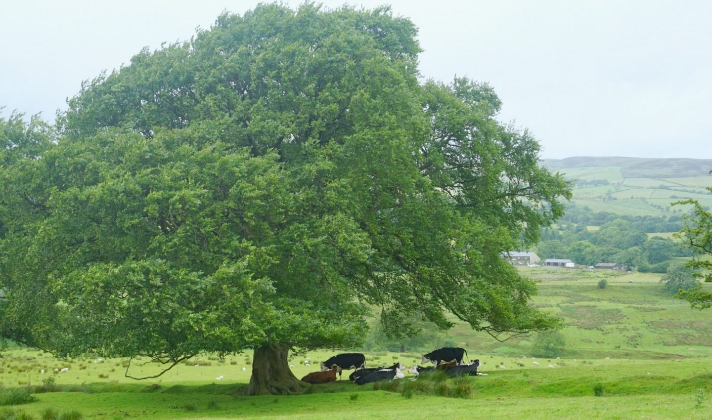 Lancashire Countryside www.extraordinarychaos.com