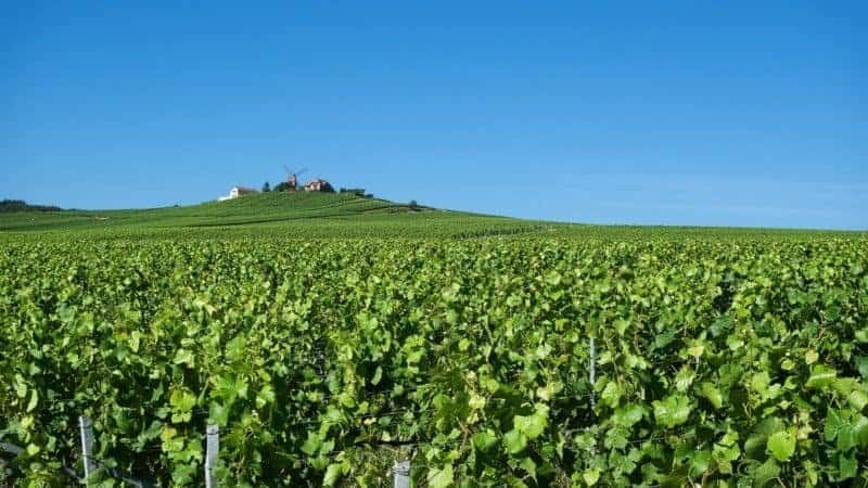 Parisi-day-trips-vineyards-800x450