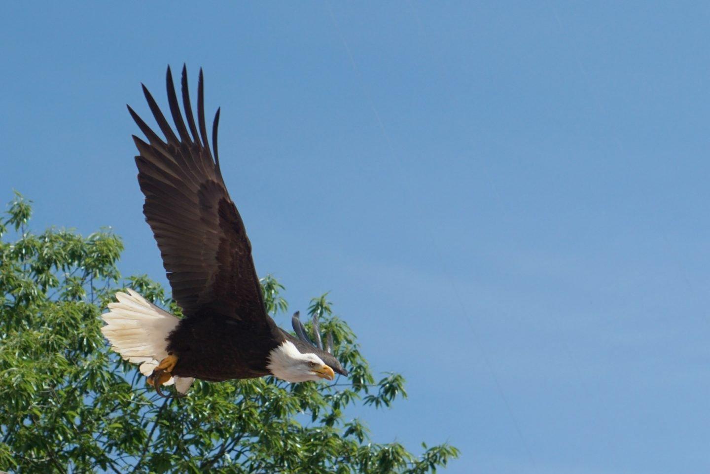 The Bird Show at Puy Du Fou www.extraordinarychaos.com