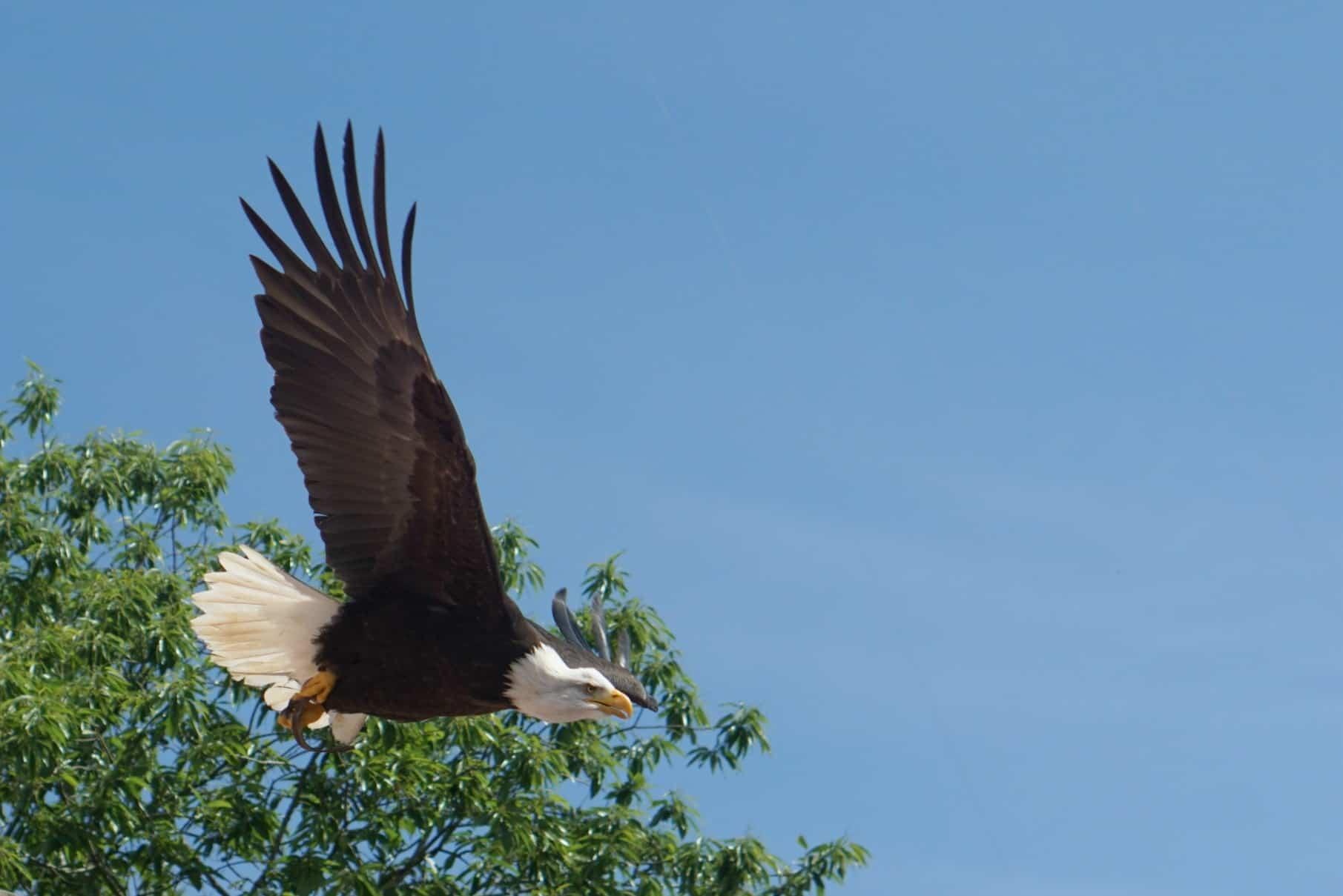 The Bird Show at Puy Du Fou, Puy Du Fou For Families