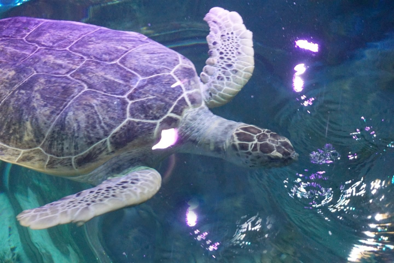Animal preservation at Sea Life Blackpool www.extraordinarychaos.com