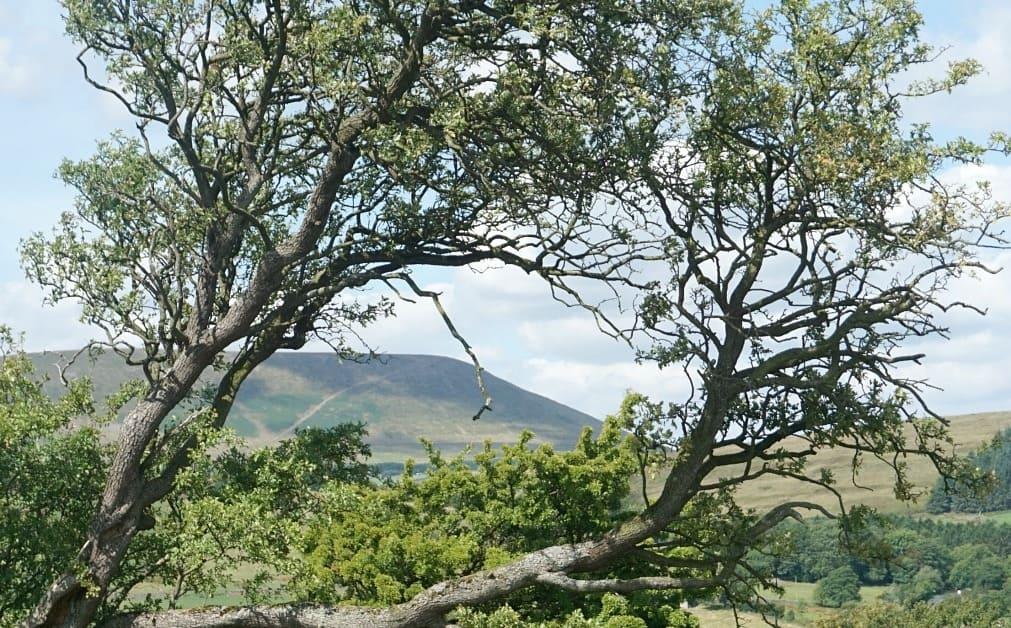 View of Pendle Hill www.extraordinarychoas.com