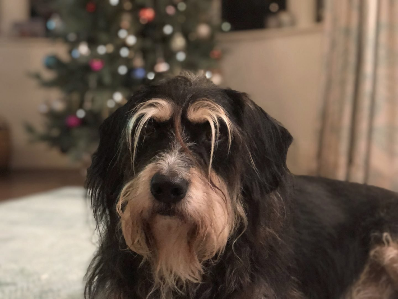 Toby At Christmas