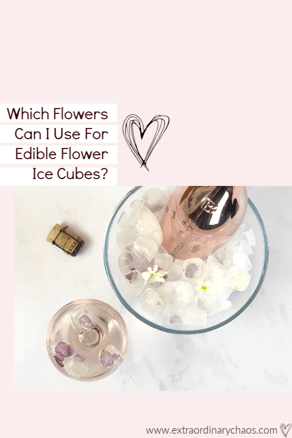 Which flowers can I use for edible flower ice cubes