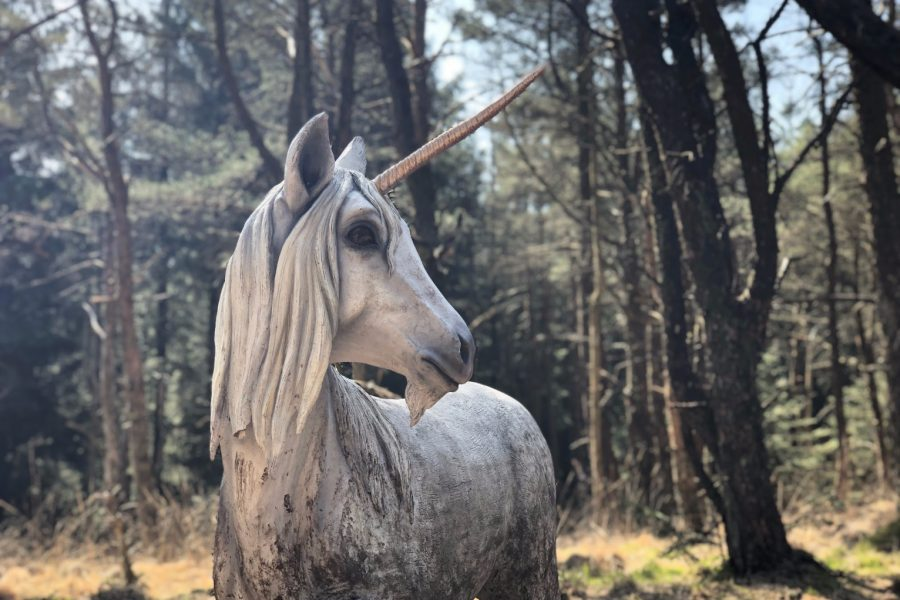 Unicorn in the forest in lancashire