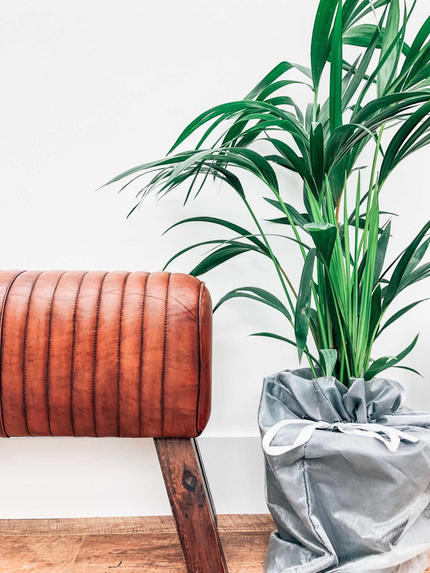 Using plants to accessorise a room