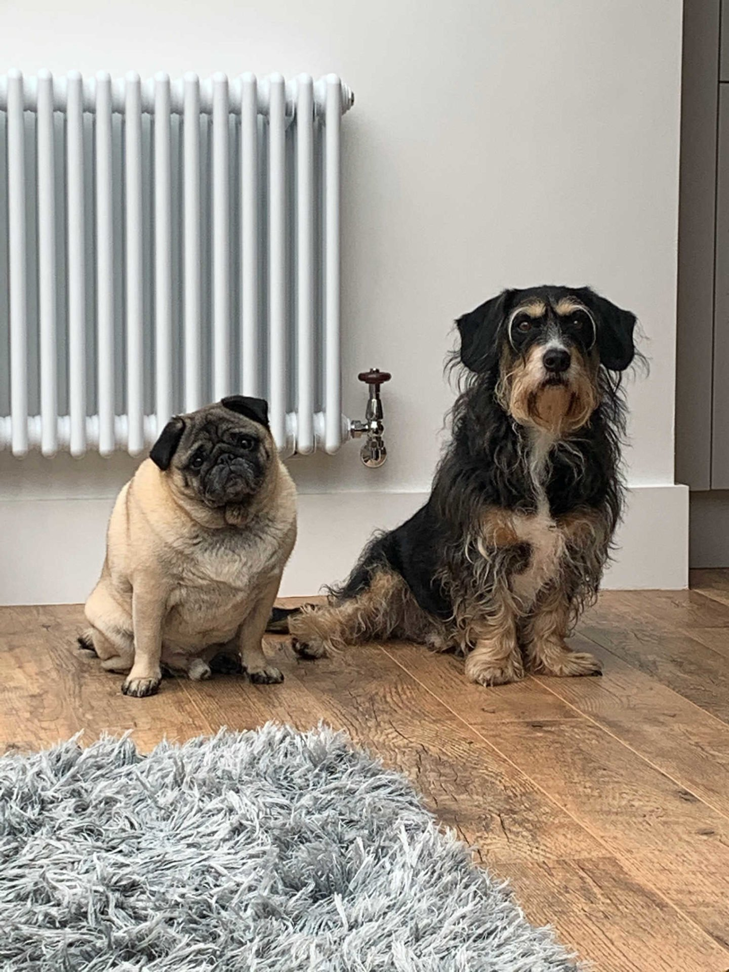 Alf and Toby