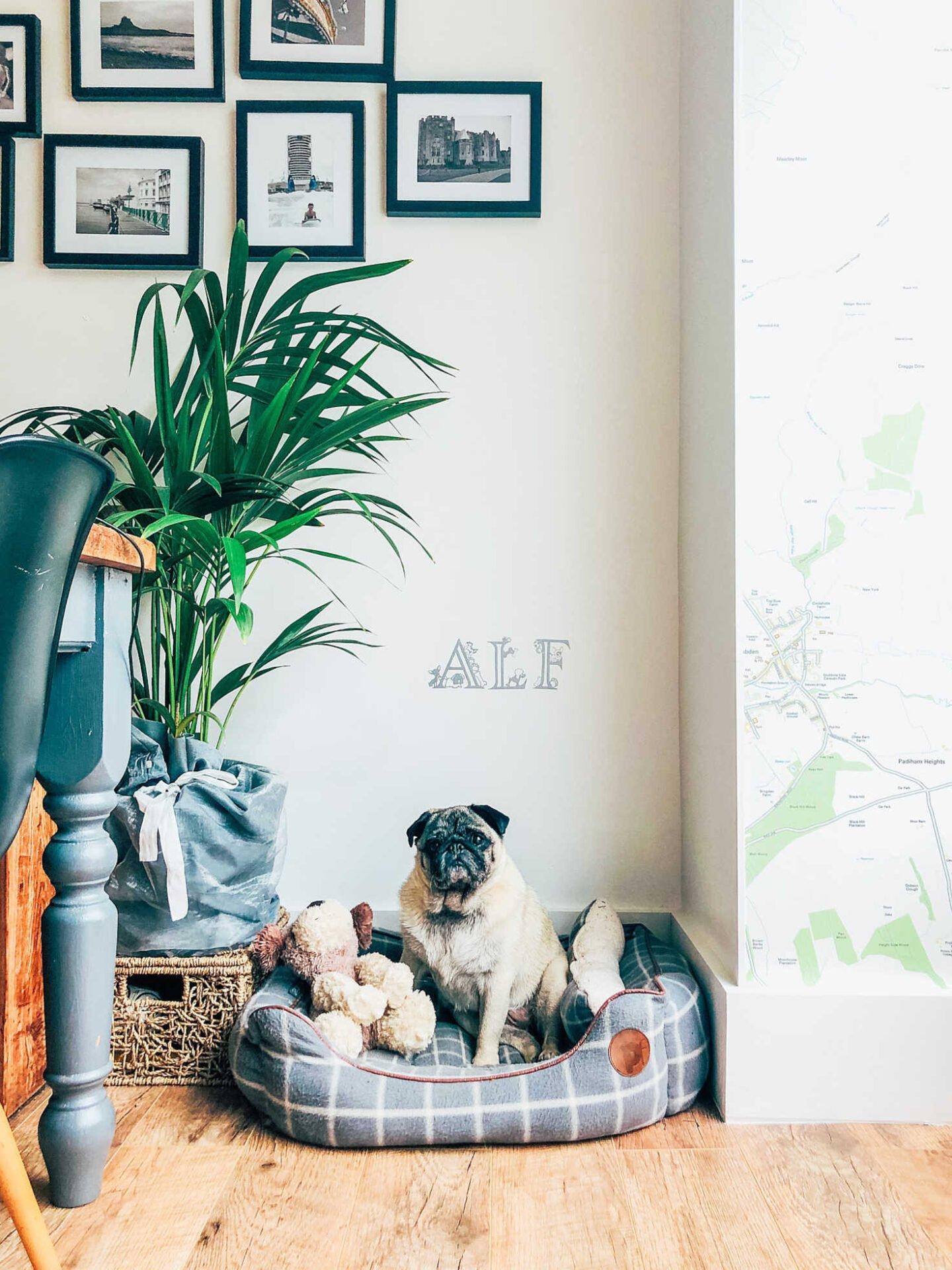 Free downloadable dog alphabet