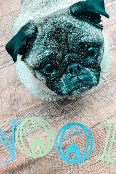 Free Cricut Dog Alphabet designed by Sarah Christie